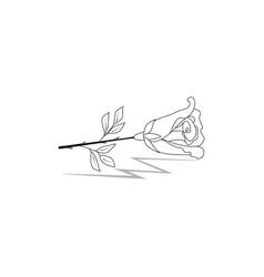 rose flower black silhouette vector image