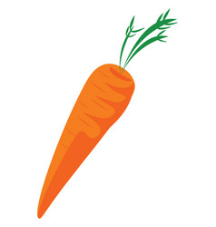 carrot hand drawn design on white background vector image