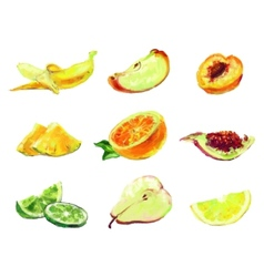 drawing slices of fruit vector image