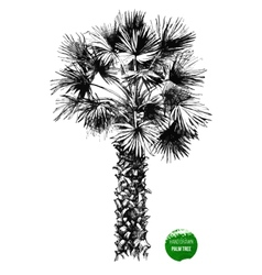 hand drawn palm tree vector image