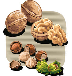 Walnuts and hazelnuts vector