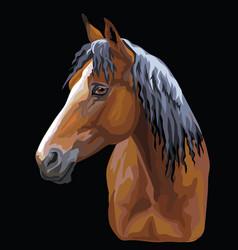 Colorful horse portrait-10 vector