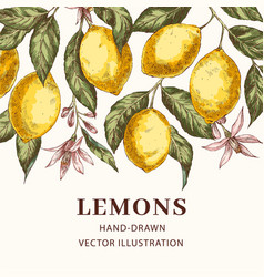 lemons hand drawn poster template vector image