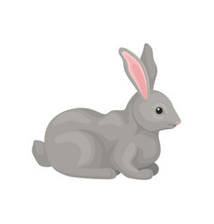Grey rabbit wild forest rodent animal vector