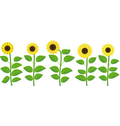isolated sunflowers vector image vector image