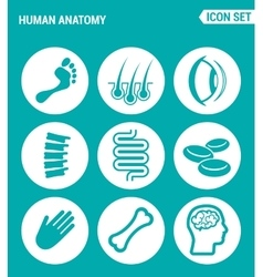 Set of round icons white Human anatomy leg hair vector
