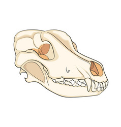 object on white background skull dog sideways vector image