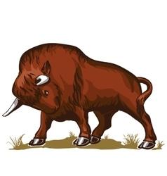 buffalo bull bison vector image