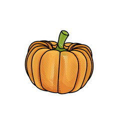 Draw pumpkin vegetable nutrition vitamin food vector