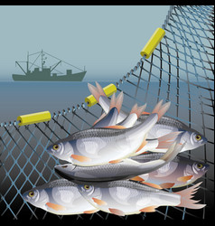 Fishery poster vector