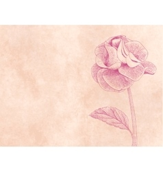 Hand drawn card with rose on pink paper background vector image