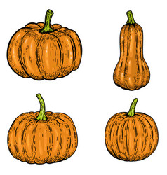 set of pumpkin isolated on white background vector image