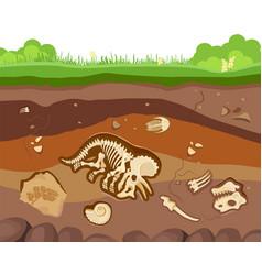 soil ground layers with buried fossil animals vector image