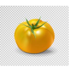 Yellow tomato realistic vector