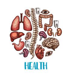 human organs health sketch poster vector image vector image