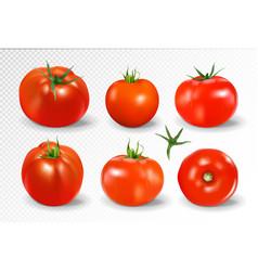 tomato set yellow tomato photo-realistic vector image vector image