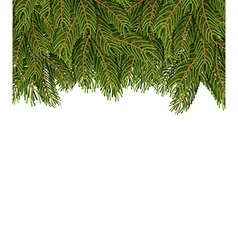 FIR branches on white sheet Christmas background vector image vector image