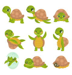 cartoon smiling turtle funny little turtles vector image