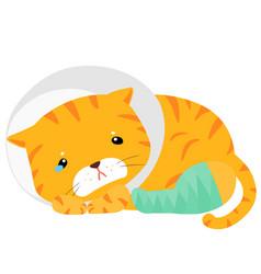 Cat injury splinting leg vector