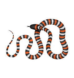 coral snake vector image