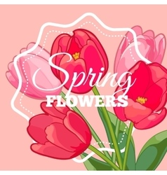 Greeting card with Blooming Tulip Flowers vector image