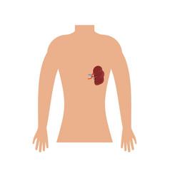 Human spleen icon flat style vector