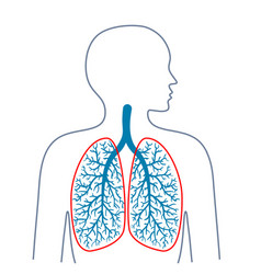 Light respiratory system medicine and health vector