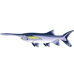 paddlefish cartoon vector image