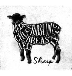 Sheep lamb cutting scheme vector