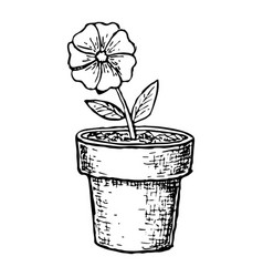 sketch potted flower vector image