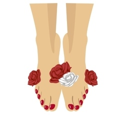 Woman feet with red pedicure and roses around vector