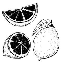 set of hand drawn lemons isolated on white vector image