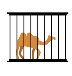 Camel in cage Animal in Zoo behind bars Desert vector