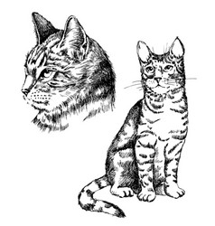 cat tattoo art or print design vector image