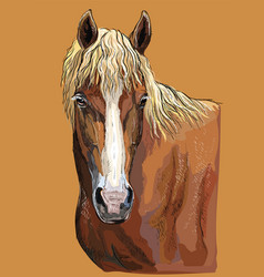 colorful hand drawing horse portrait-4 vector image