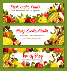 exotic tropical fruit frame and border banner set vector image