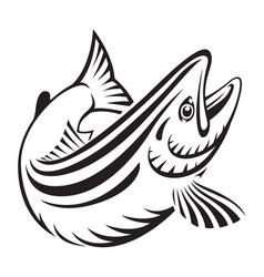 graphic salmon fish vector image