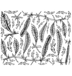 Hand drawn of caulerpa taxifoli seaweed on white b vector