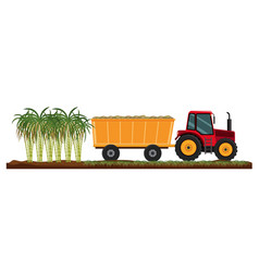 Isolated sugarcane plant agriculture vector