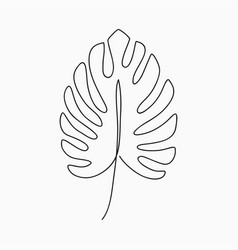 Monstera one line vector