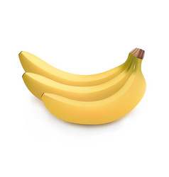 Realistic image of bunch of bananas vector