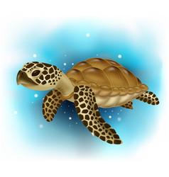 Sea turtle swimming in ocean vector