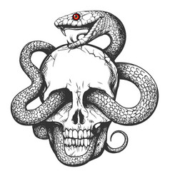 Skull with snake tattoo vector