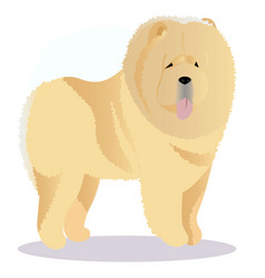 Chow chow dog tricolor vector