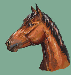 colorful hand drawing horse portrait-6 vector image