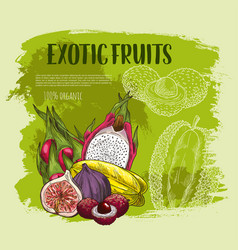 Exotic tropical fruit sketch grunge poster design vector