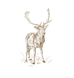 forest deer with branchy horns in sketch style vector image