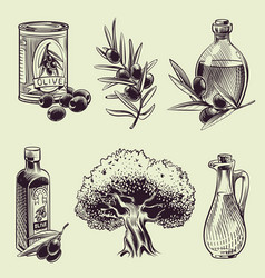 hand drawing olives vintage olive branches oil vector image