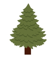 Pine tree of Merry Christmas design vector