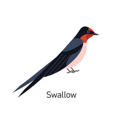 swallow or martin isolated on white background vector image